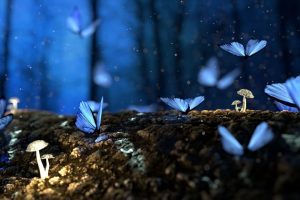 moon butterflies